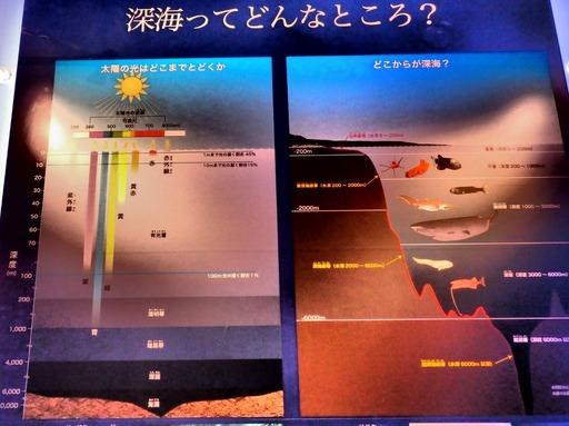 科博 深海 001 (1280x960)