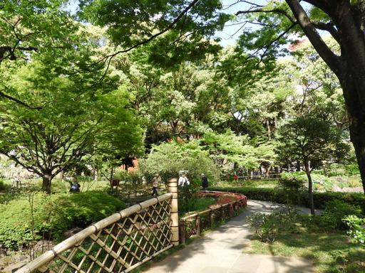 横浜公園 チューリップ 065