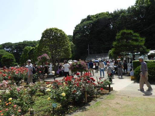 生田緑地ばら苑 035