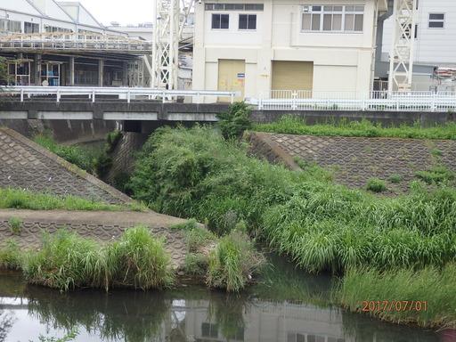 030舞岡川 柏尾川と合流