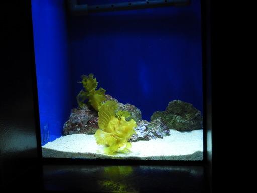 池袋サンシャイン水族館 014