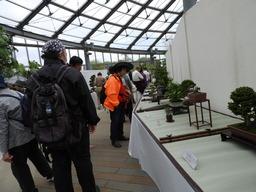 099第23回 春の盆栽展