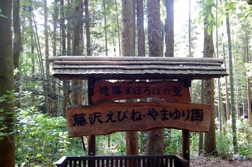 127藤沢えびね・やまゆり園