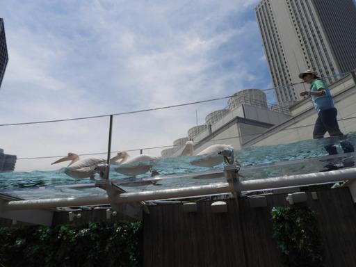 池袋サンシャイン水族館 034