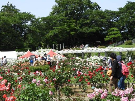 生田緑地ばら苑 067