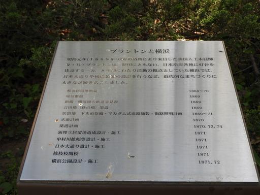 横浜公園 チューリップ 051