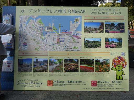横浜公園 チューリップ 074