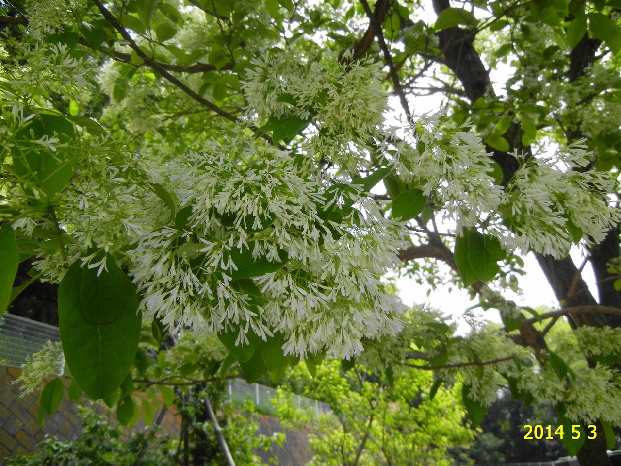 花 を ひ ろ う                siinomi907