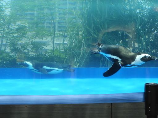 池袋サンシャイン水族館 045