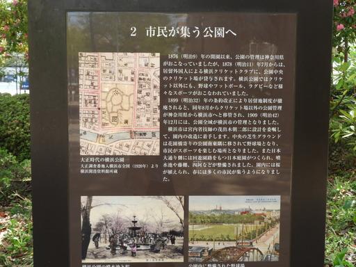 横浜公園 チューリップ 047