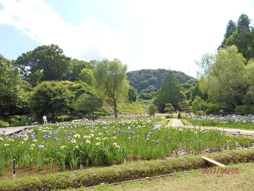 127横須賀しょうぶ園