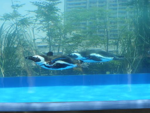 池袋サンシャイン水族館 046
