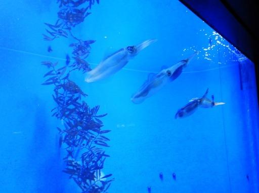 池袋サンシャイン水族館 009