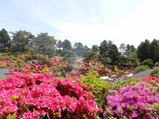 099 青梅塩船観音寺つつじ祭り