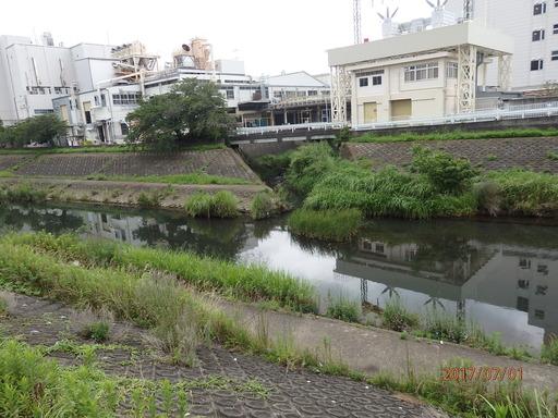 035舞岡川 柏尾川と合流