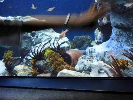 池袋サンシャイン水族館 015