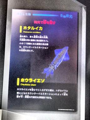 科博 深海 009
