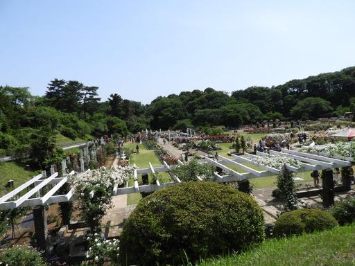 生田緑地ばら苑 020