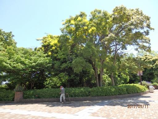 021 ジャケツイバラ 金沢動物園