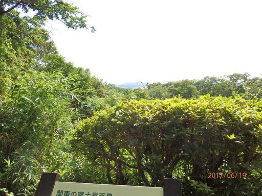 229瀬上の森