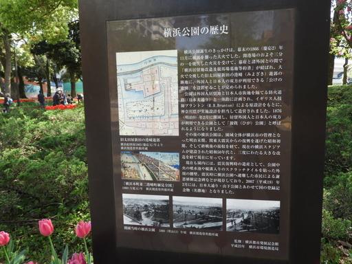 横浜公園 チューリップ 049