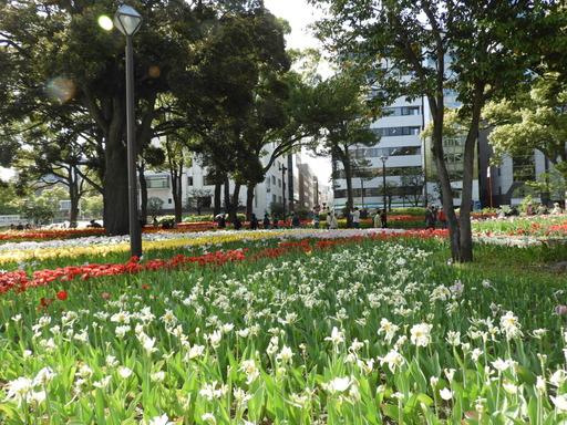 横浜公園 チューリップ 076