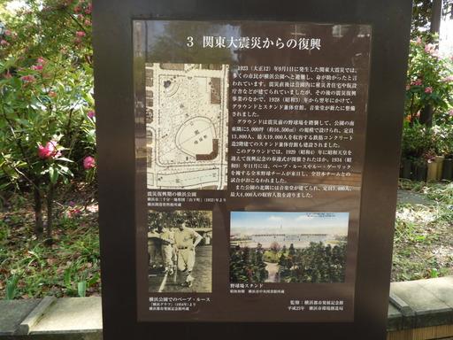 横浜公園 チューリップ 048