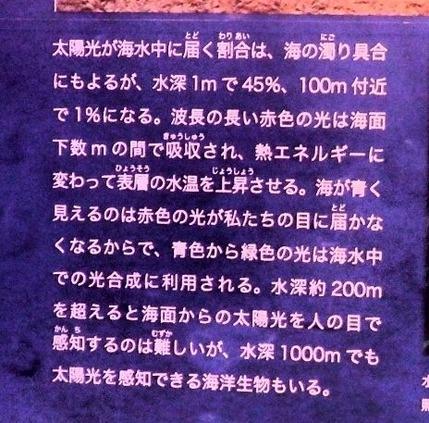 科博 深海 002 (1280x960)