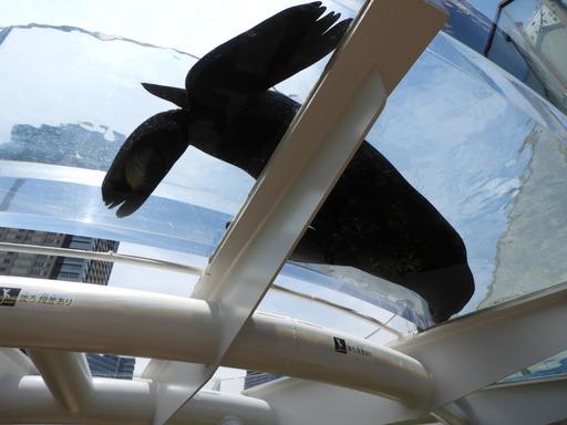 池袋サンシャイン水族館 033