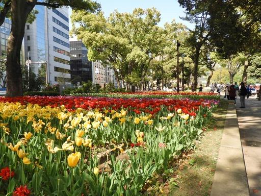 横浜公園 チューリップ 017