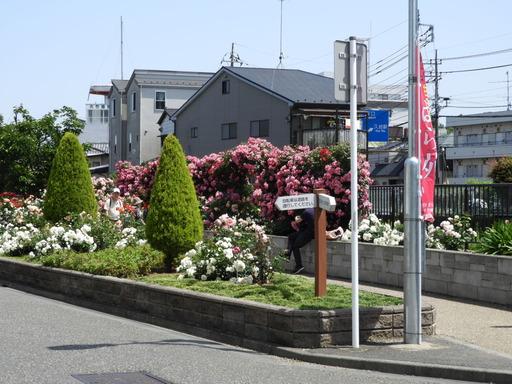 生田緑地ばら苑 001