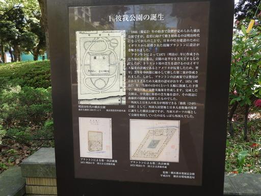 横浜公園 チューリップ 045