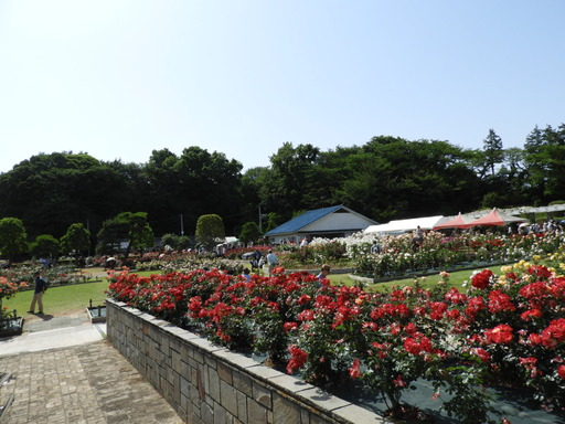 生田緑地ばら苑 080