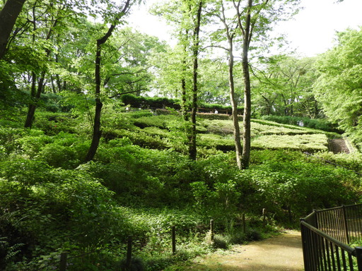 036東高根森林公園