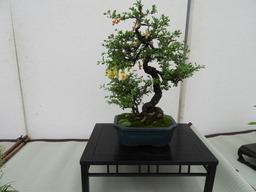 102第23回 春の盆栽展