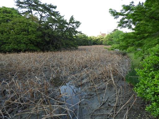 四国 145栗林公園