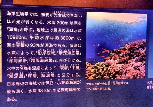科博 深海 004