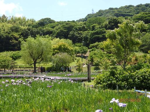 057横須賀しょうぶ園