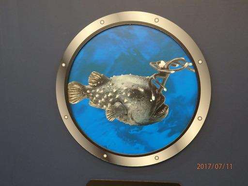 科博 深海 062