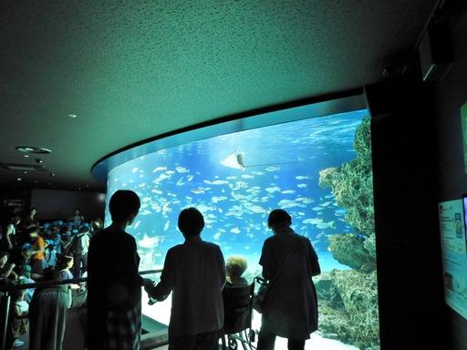 池袋サンシャイン水族館 011