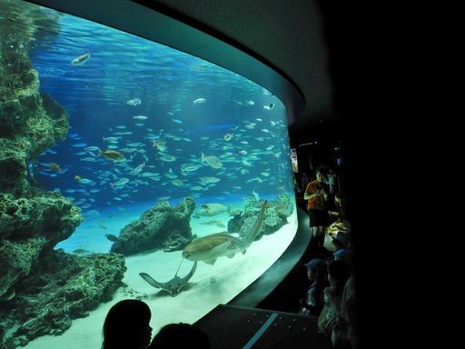 池袋サンシャイン水族館 010