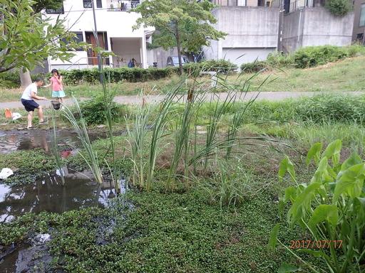谷矢部池公園 001