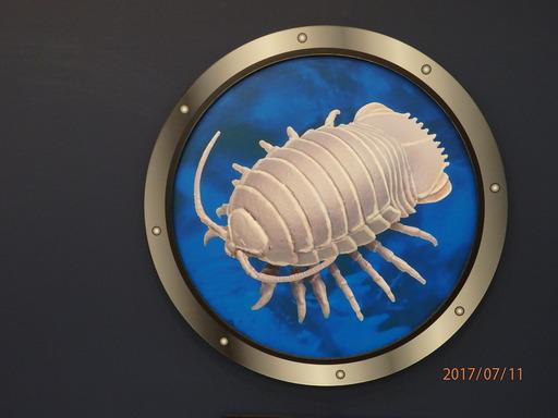 科博 深海 060