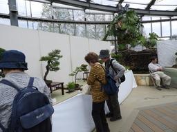 100第23回 春の盆栽展