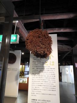 四国 256金陵蔵元歴史館 杉玉