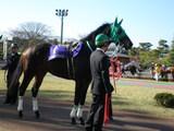 サンキューウィン 東京シティ盃
