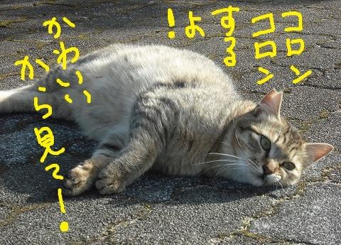 2017_04190047