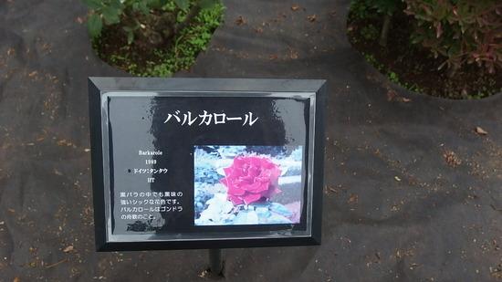 PA300899