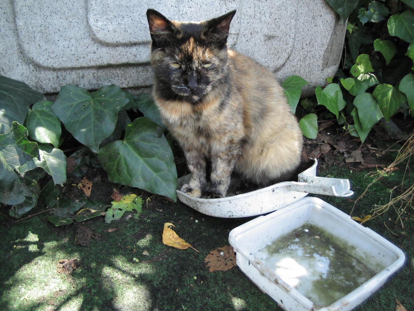 チリトリ猫さん