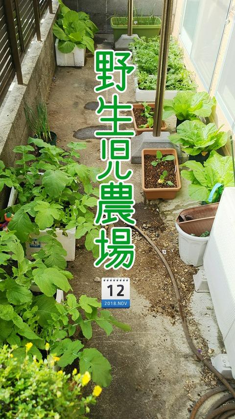 18-11-12-11-40-59-012_deco
